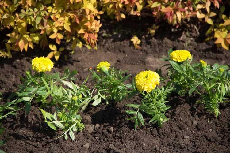 Висадження квітів (13)