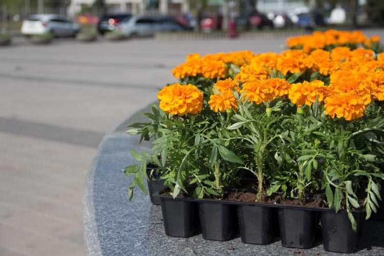 Висадження квітів (4)