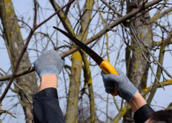 depositphotos_300962424-stock-photo-cutting-a-tree-branch-with
