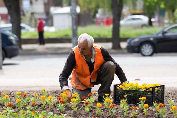 Відновлення паркових квітників (4)