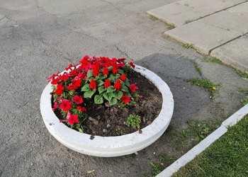цвеи_2