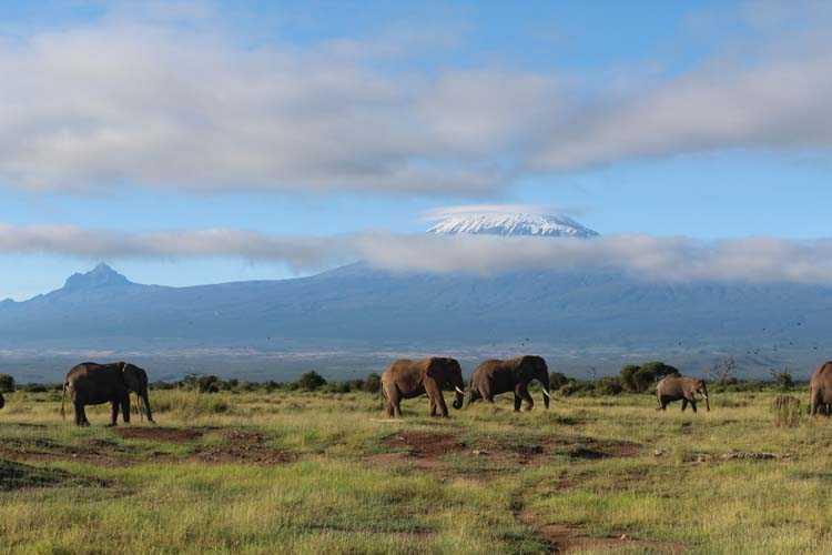 Килиманджаро виднее из Кении