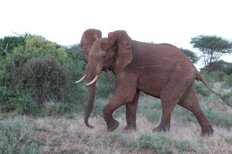 красные слоны всегда прекрасны!
