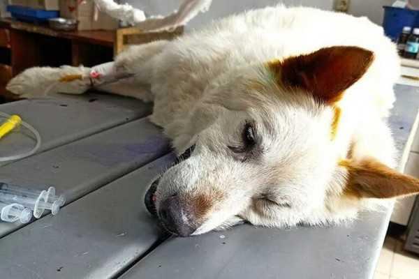собака_(1)