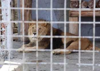 Зоопарк - тюрьма для животных
