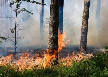 depositphotos_24999337-stock-photo-forest-fire