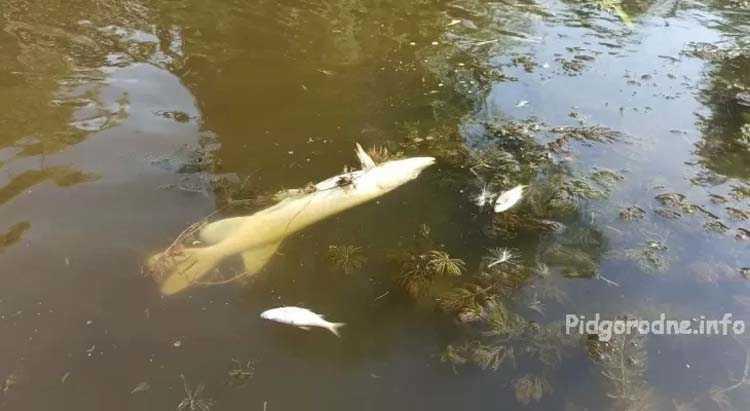 гибнет_рыба