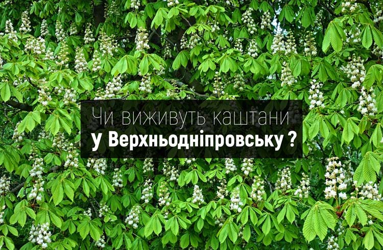 236971601_1437546989958964_6878145696564124086_n