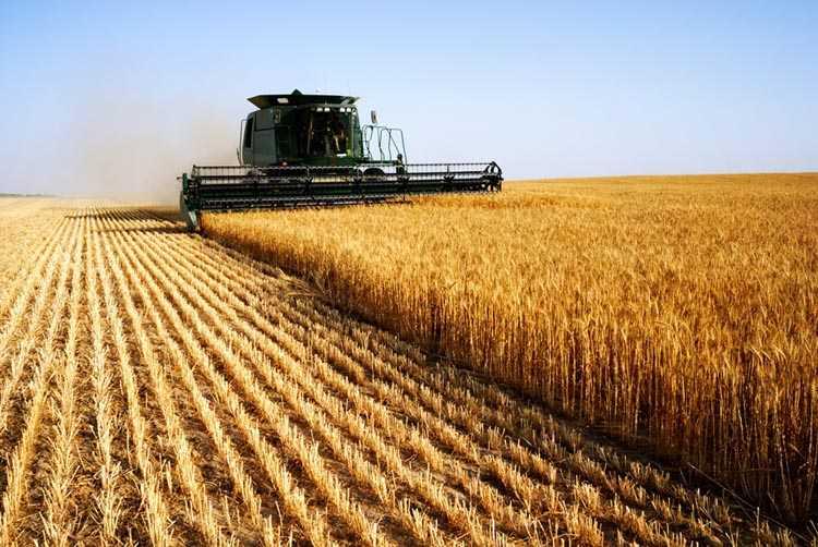 ава зерно