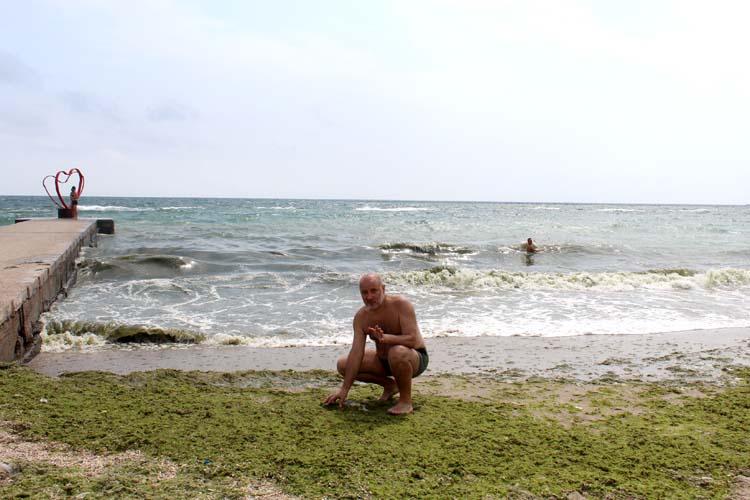 водорослей на одесских пляжах зватает